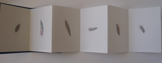 Concertina book showing hand-coloured individual jay feathers on each page.