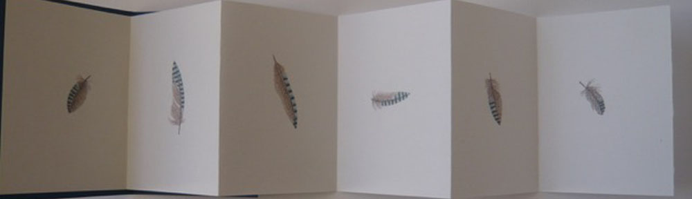 Jay Moschatel Press 2013 concertina with hand coloured jay feathers.1000x288